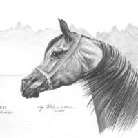 Estaka, arabian mare, 21x30 cm, based on the photo made by Ewa Imielska -Hebda